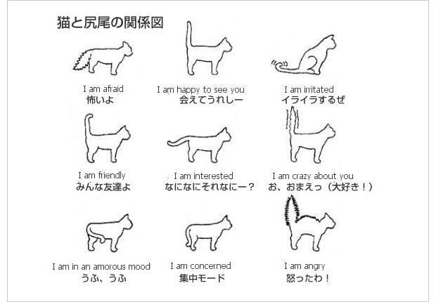 猫のしっぽ!しっぽの動きで分かる猫のホントの気 …