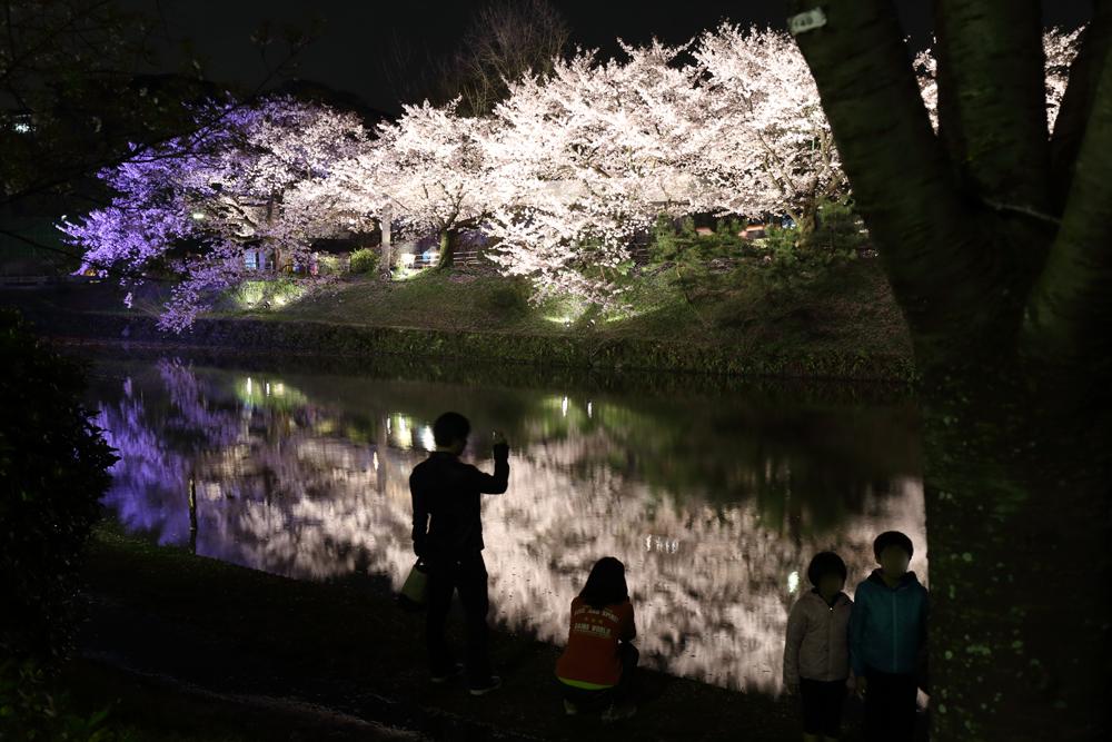 桜と人を一緒に撮影