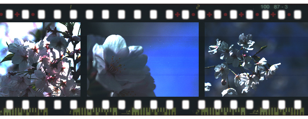 桜の写真がうまく撮れない時に試してみては?桜の写真を撮るときの考え方