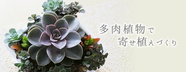 多肉植物で寄せ植えづくり