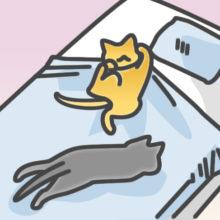 ネコとわたしのふたり暮らしvol.24 ネコとの上手なスキンシップ